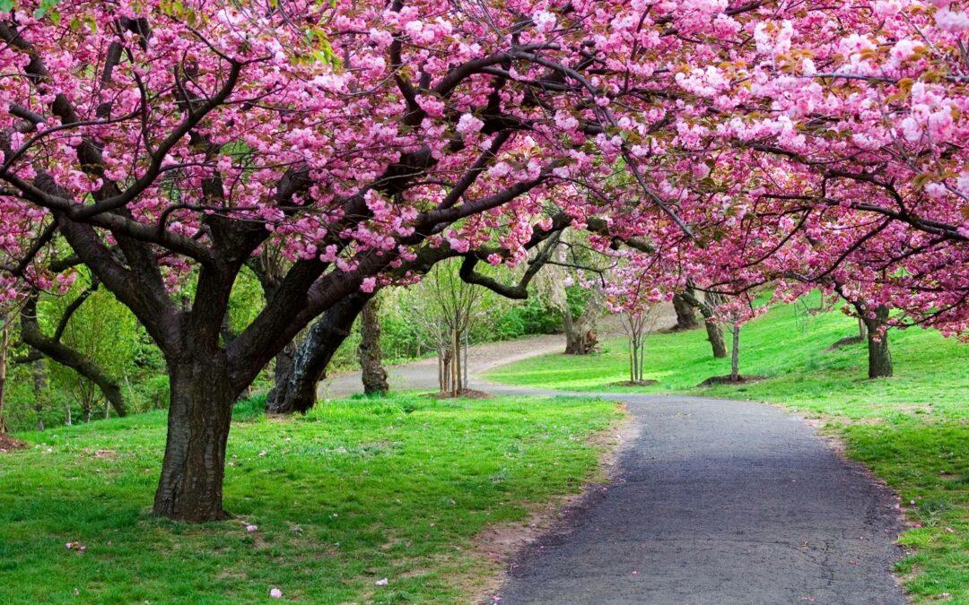 Blossom - Antenatal Classes - New Life